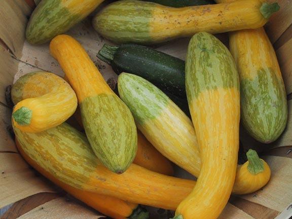 online farmers market rutherford county farmers fresh market